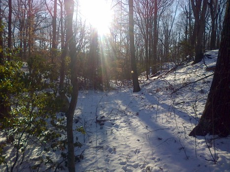 Winter Walk 2014