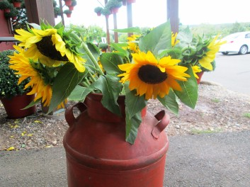 Sunflowers in bucket at belltown